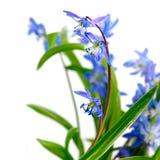 Flowers closeup Stock Image