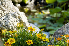 Flowers. Closeup of flowers with rocks in background Royalty Free Stock Photography
