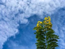 Flowers cloud yellow blue sky morning Stock Image