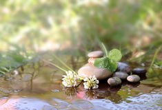 Flowers of a clover and stones for Spa in water Stock Photos