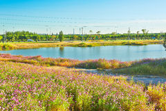 The flowers in clusters and lake Royalty Free Stock Photo