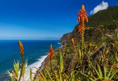 Flowers on coast in Boaventura - Madeira Portugal Stock Photos