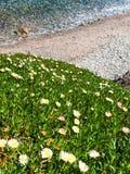 Flowers on coast Stock Photos