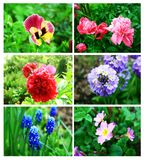 Flowers collage Stock Images