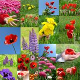 Flowers, collage Stock Photos