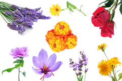 Flowers collage Royalty Free Stock Photo