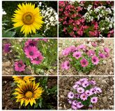 Flowers, collage royalty free stock images