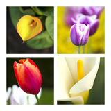 Flowers collage Royalty Free Stock Photography