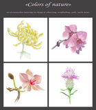 Flowers collage. Set of four isolated hand painted flowers Royalty Free Stock Photo