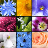 Flowers collage. Collage of bright beautiful flowers Stock Photos