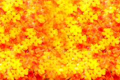 Flowers Collage Background Royalty Free Stock Photo