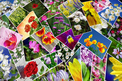 Flowers collage. Stock Photos