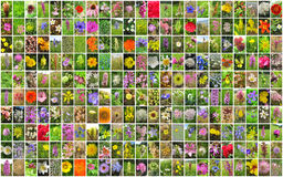 Flowers collage. royalty free stock image