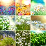 Flowers collage Stock Image