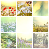 Flowers collage Stock Photos