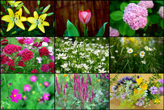 Flowers. Collage with lot of bloom flowers Royalty Free Stock Photos