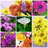Flowers collage Royalty Free Stock Images
