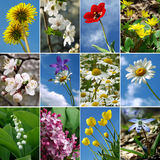 Flowers collection Royalty Free Stock Photography