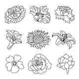 Flowers Collection. Different kinds of flowers in sketch style. It contains hi-res JPG, PDF and Illustrator 9 files Royalty Free Stock Photography