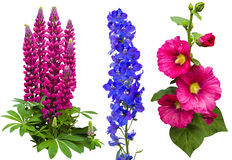 Flowers Collection Royalty Free Stock Images