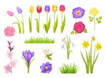 Flowers Collection Poster Vector Illustration. Flowers collection, poster with floral elements and grass, snowdrops and tulips, roses and narcissus, gerbera Stock Photography