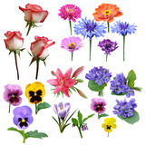 Flowers collection of roses violet. Carnation Lily majors stock photo