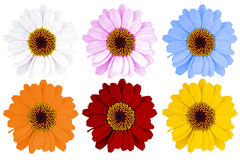 Flowers Stock Photography