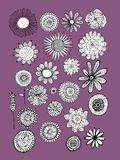 Flowers collection, sketch for your design Royalty Free Stock Images