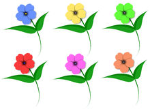 Flowers in color. Vector illustration of flowers in color vector illustration