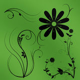 Flowers with a color background Royalty Free Stock Photo