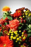 Flowers colored Stock Photography