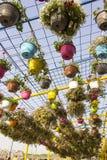 Flowers in Colored Pots Dubai Miracle Garden. Flowers in Pots Dubai Miracle Garden Royalty Free Stock Photos