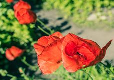 Flowers colorful bright Stock Photography