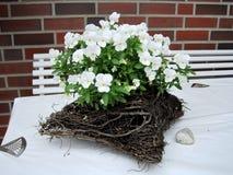 White flowers basket. design ideas Stock Image