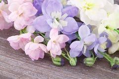 Flowers Royalty Free Stock Photos