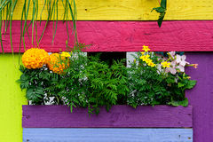 Flowers and colorful painted background Royalty Free Stock Photos