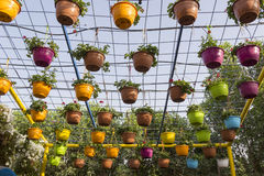 Flowers in Colorful Pots Dubai Miracle Garden. Flowers in Pots Dubai Miracle Garden Stock Image