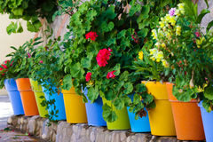 Flowers in colorful pots Royalty Free Stock Images