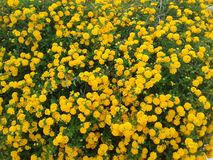 Flowers. Colorfull garden flowers Royalty Free Stock Photography