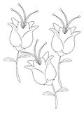 Flowers coloring page Stock Photo