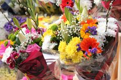 Flowers colors bucket outdoor spring summertime royalty free stock photos