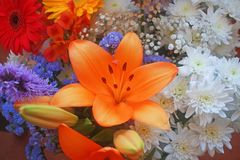 Flowers and colors, lilies, chrysanthemums and daisies. Beautiful floral composition. In the center stands out the orange lily freshly flowered with its long Royalty Free Stock Image