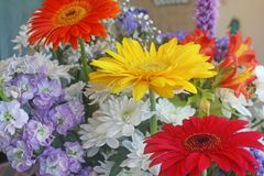 Flowers and colors, red, yellow and orange bergen daisies. Beautiful floral composition of colored daisies and chrysanthemums Royalty Free Stock Images