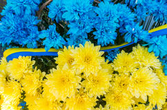Flowers in the colors of Ukraine flag. Blue and yellow stripes. Flowered flag of the Ukraine. Blue and yellow stripes with colored flowers close-up Stock Images
