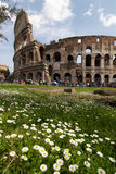 Flowers and Colosseum royalty free stock photography