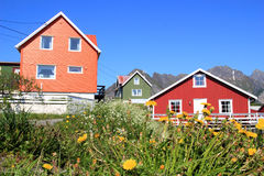 Flowers and colours of Henningsvaer Royalty Free Stock Image