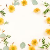Flowers composition background. Frame pattern made of yellow flowers on white background. stock images