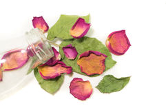 Flowers composition of dried rose flowers. Valentine`s day. Drie Stock Photo