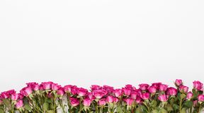 Flowers composition. Frame made of red rose on white wooden background. Flat lay, top view, copy space royalty free stock image