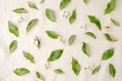 Flowers composition. Pattern made of green leaves  and flowers on white tissue background. Flat lay, top view. Flowers composition, pattern made of green leaves Stock Images